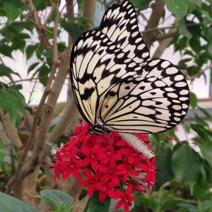 butterfly-house-gallery-1